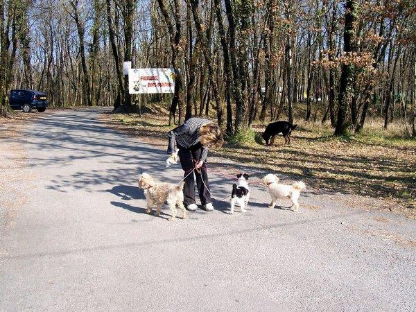 le parc des chiens